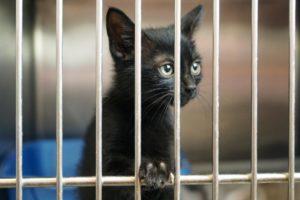 Junge Katze im Tierheim