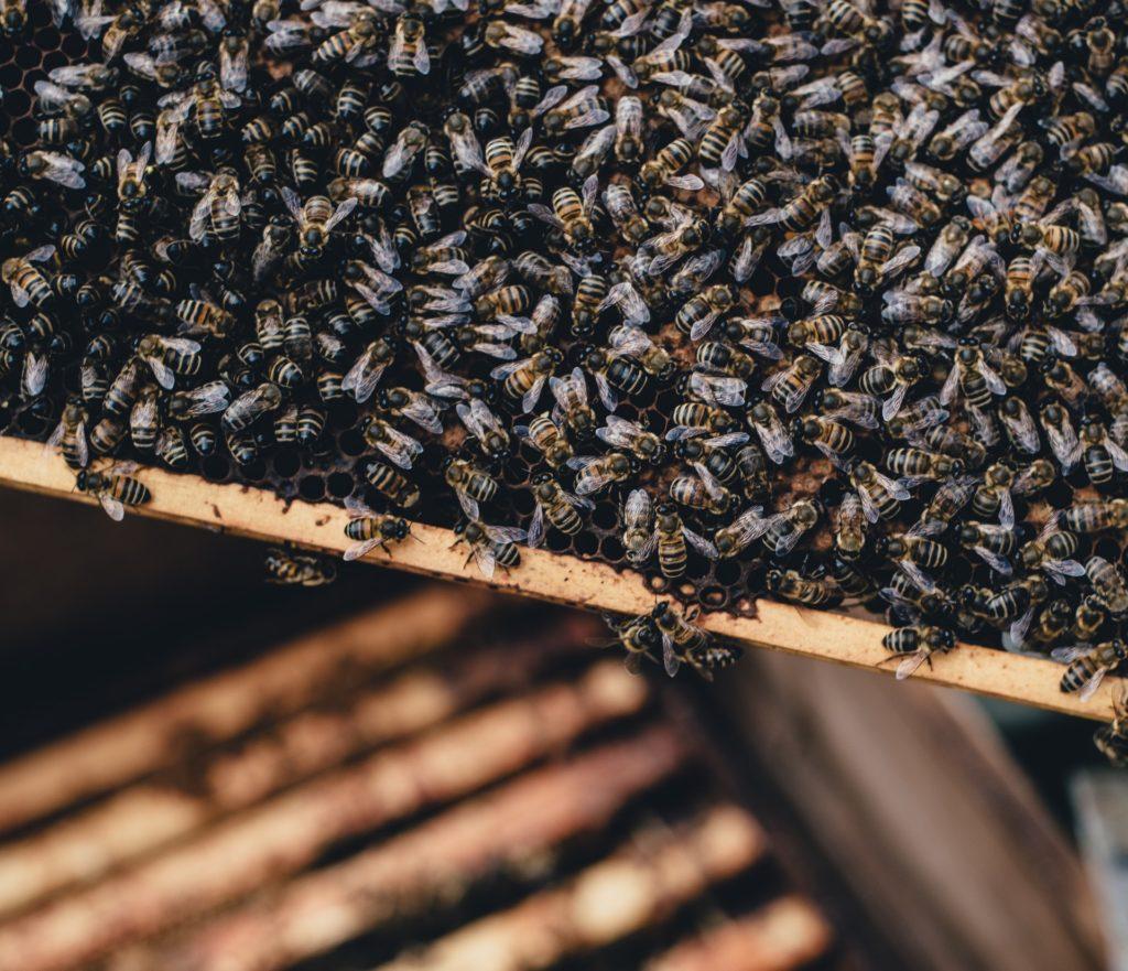 Bienen mit Honigwaben