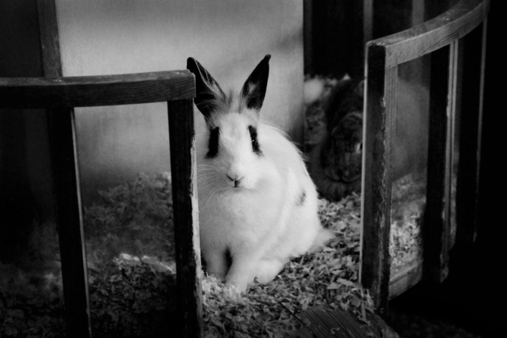 Kaninchen im TierQuarTier Wien