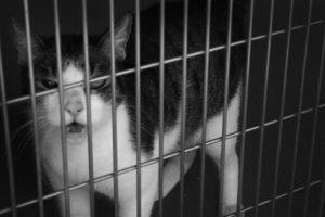 Katze im TierQuarTier Wien
